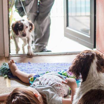 CALIFORNIA, USA: Family + Puppy = Happiness?
