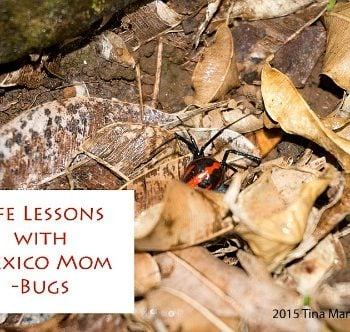 MEXICO: Life Lessons About Bugs