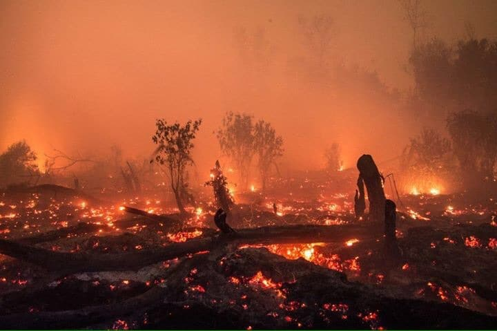 INDONESIA: Forest Fire From a Mom's Perspective