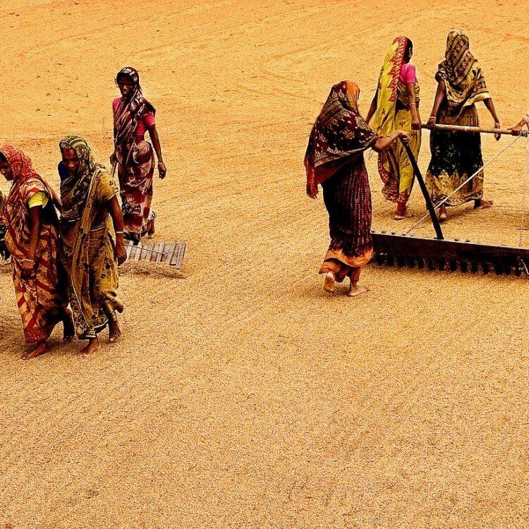Women working in rice fields in Asia.
